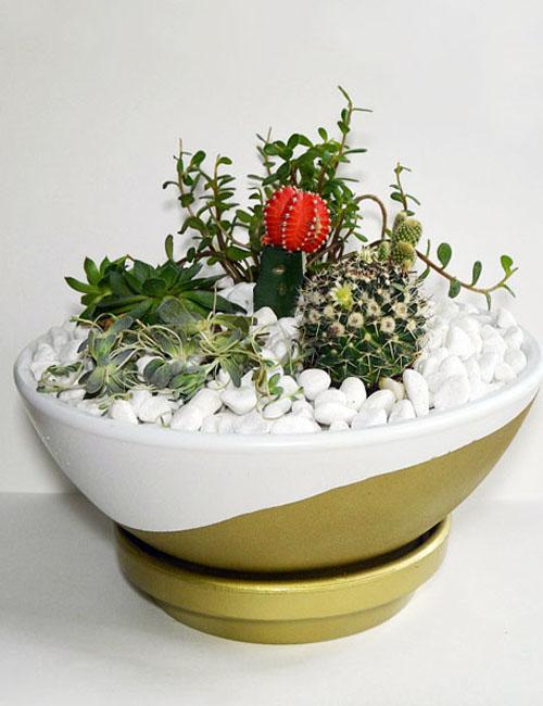 Succulent Cactus Garden